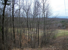 All are wooded - some with pasture, and most with views