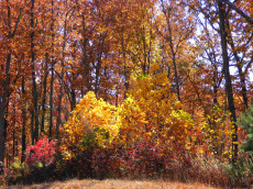 Colors of Fall in Bear Knob Development