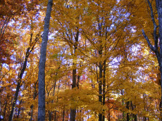 Wooded Lots Available in Bear Knob