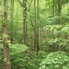 12.5 Acres of Level/Wooded area in Honey Springs - Crawford, TN - $60,000