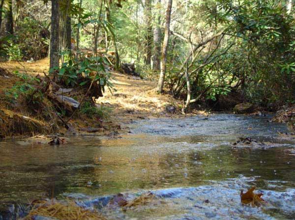 Lots of streams