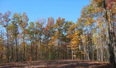 Captured wooded area during the fall