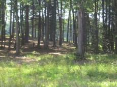 Plenty of Wooded Horseback riding trails