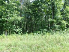 Partially Wooded Corner Lot - 3.89 Acres – Clarkrange, TN - $39,000 - Picture 3