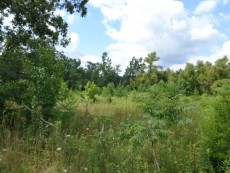 Picture 1 for 1 Acre – Clarkrange, TN - $10,000
