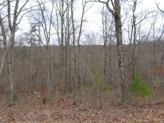 wooded homesite