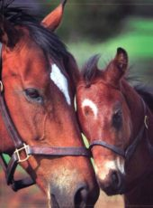 River Park offers a peaceful environment for both you and your horses