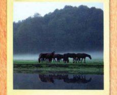River Park offer spacious pastures